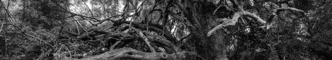 Présentation - fond arbre - FRACG - Fédération du Réseau artistique et culturel - Genève